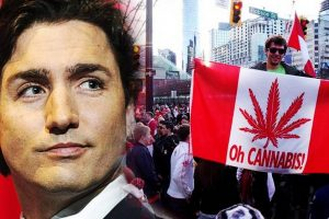 What You Need to Know About the Legalization of Recreational Marijuana in Canada