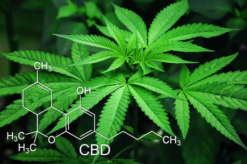 National CBD Day, all that You Need to Know